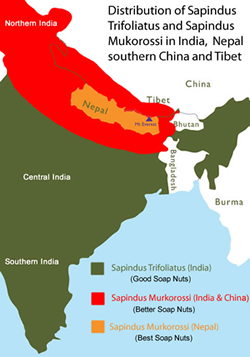 Distribution of Soap Nuts in India Nepal China and Tibet