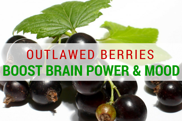 Outlawed Berries Boost Brain Power and Mood