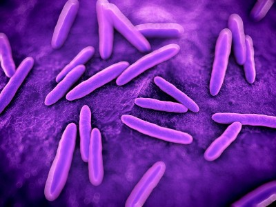 "Probiotics And Mitochondria: Bacteria Are Not ""Other"""